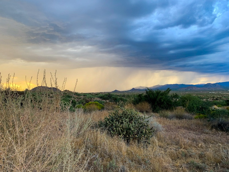 Desert landscape with brush and cacti in the foreground, mountains in the background, and a sunset contrasting storm clouds and rain in the sky.